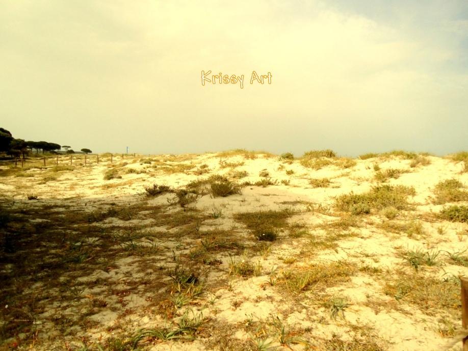 Dune di sabbia nella spiaggia di Salamaghe a Budoni - Sardegna - Krissy ph