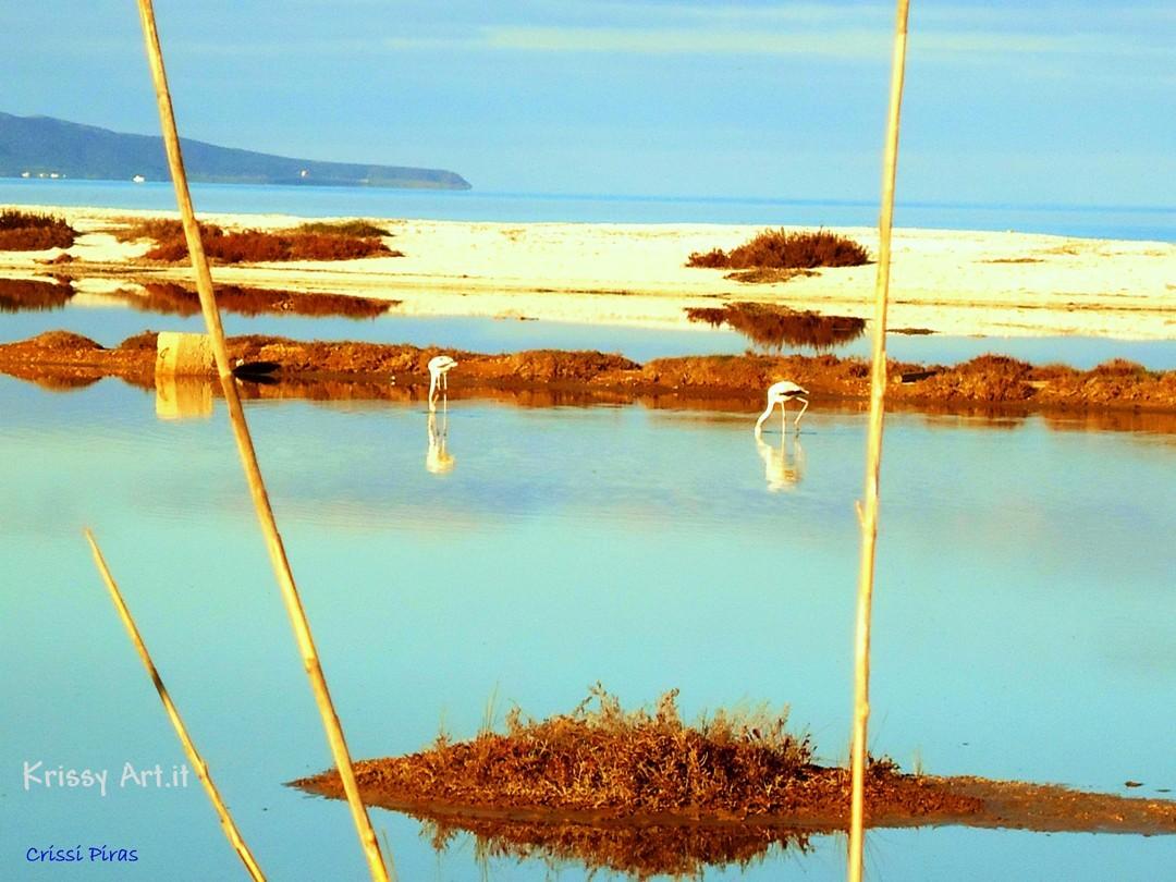 Fenicotteri nello stagno le saline a Stintino - Sardegna
